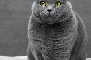 5 Signs Your Cat Has Diabetes