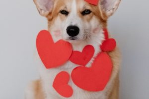 5 Things to Watch Out For If Your Pet Has A Heart Murmur