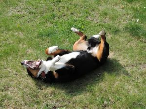 Allergies In Pets, Scratching The Surface