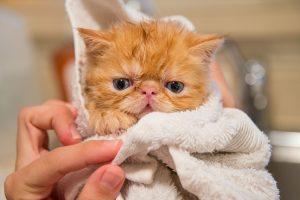 How Often Should I Bathe My Dog or Cat