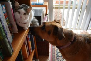 How To Introduce Old Pets To New Pets