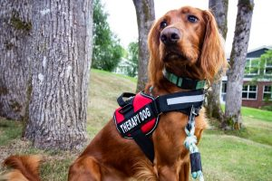 How to Train Your Pet to be a Therapy Dog