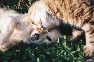 Periodontal Disease in Cats and Dogs