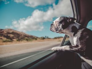 Preparing for Emergencies and Evacuations with Your Pet