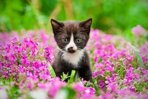 Protecting Your Cat From Dangerous Plants