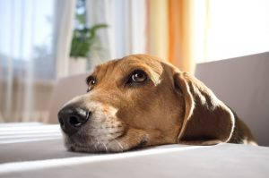 Tips For Pets With Noise Phobia